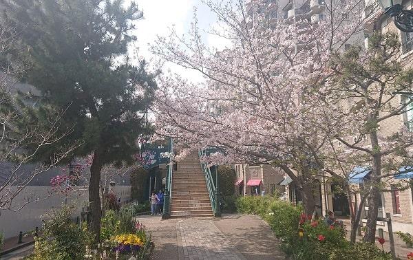 花のみちセルカの桜