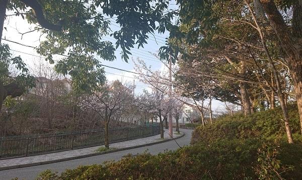 山手台南公園の桜