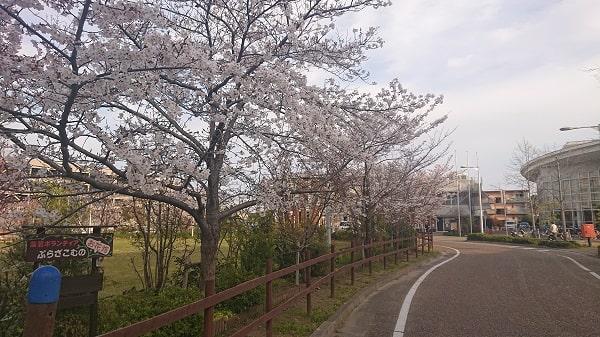 フレミラ宝塚の桜