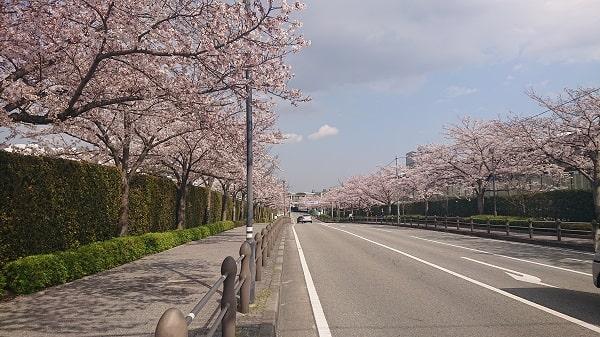 阪神競馬場の桜