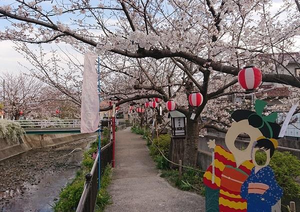 小浜宿の桜