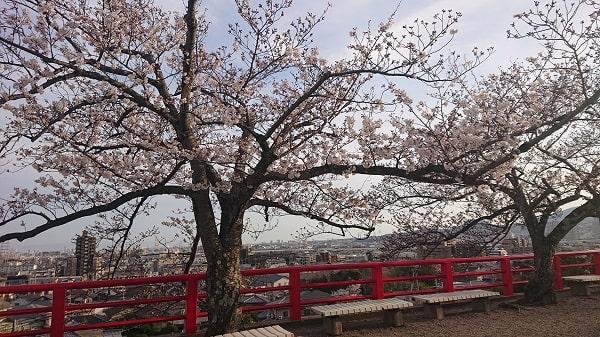 中山寺の桜