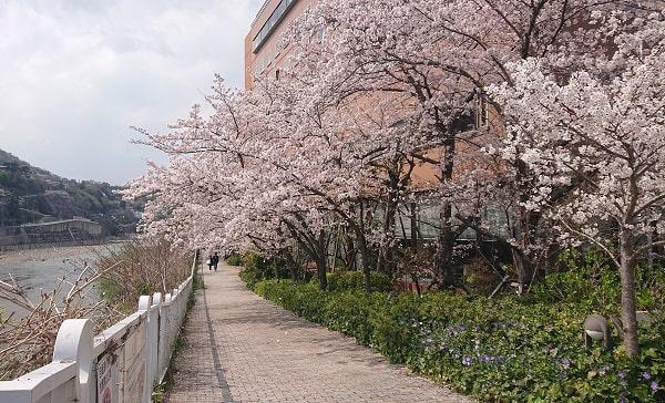 宝塚ワシントンホテルの桜