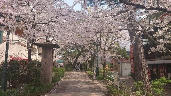 宝塚の花のみちに桜