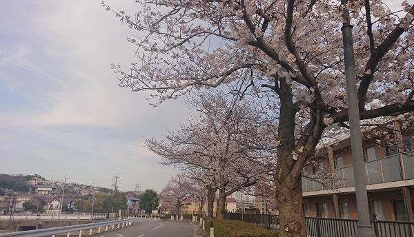 売布神社の桜