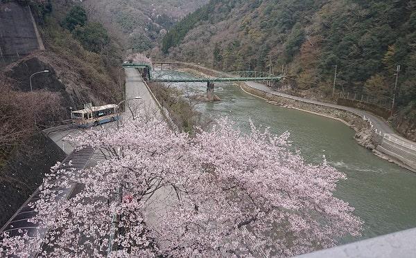 武田尾駅の桜