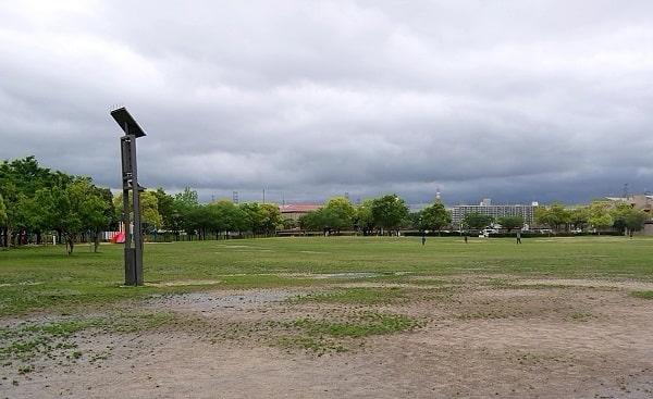 末広中央公園の芝生