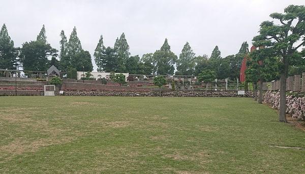 バラ公園の芝生